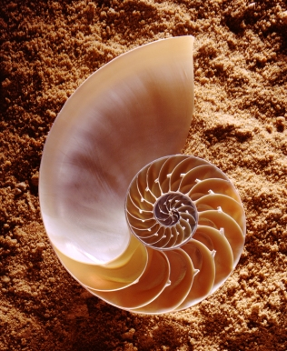 CSIRO_ScienceImage_2933_Nautilus_shell