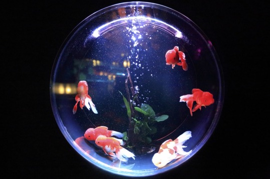 fish-bowl-846060_960_720